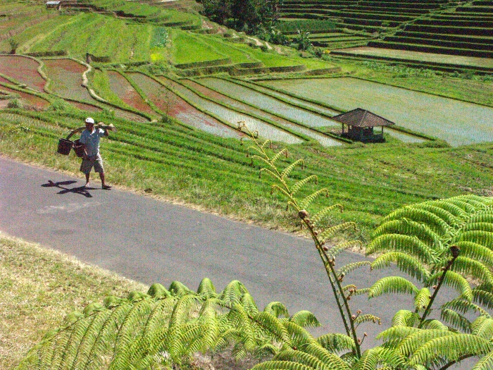 Jatiluwih, Bali